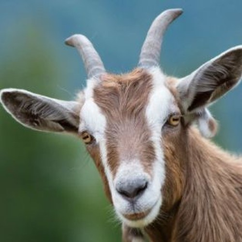 What Gets God's Goat?